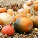 wintersquash1